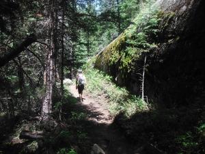 Lone hiker on the Cross Creek Trail.